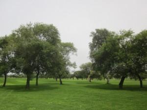 滝川市民ゴルフ場1